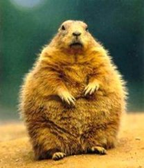 ground-hog-day